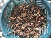 Male And Female Sexual Herbal Doctor   Sexual Wellness for sale in Greater Accra, Ga South Municipal