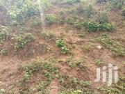 50 Acre's Of Land   Land & Plots For Sale for sale in Eastern Region, Akuapim North