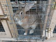 Rabits For Sale | Livestock & Poultry for sale in Greater Accra, Ga South Municipal