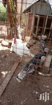 Turkey Eggs | Livestock & Poultry for sale in Brong Ahafo, Techiman Municipal