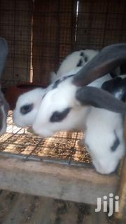 Rabbit For Breeding And For Meat | Livestock & Poultry for sale in Greater Accra, Ashaiman Municipal