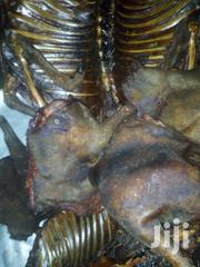 Bush Meat Of Variuse Kinds | Meals & Drinks for sale in Greater Accra, Accra Metropolitan
