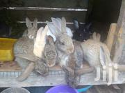 6 Weeks Bunnies | Livestock & Poultry for sale in Greater Accra, Teshie-Nungua Estates