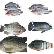Fresh Tilapia For Sell | Fish for sale in Greater Accra, Achimota