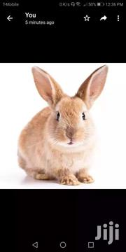 Rabbit For Sale | Livestock & Poultry for sale in Greater Accra, Achimota