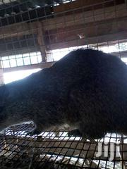 GRASS CUTTER | Other Animals for sale in Greater Accra, Ga West Municipal
