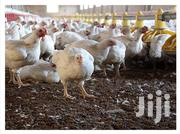 Chickens For Sale | Livestock & Poultry for sale in Greater Accra, Ashaiman Municipal