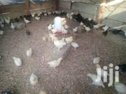 Poultry Farm | Other Animals for sale in Central Region, Gomoa East