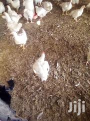 Broilers For Sale | Livestock & Poultry for sale in Brong Ahafo, Sunyani Municipal