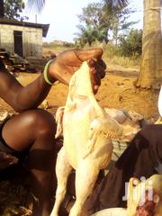 Good And Affordable Live And Slaughtered Broilers | Meals & Drinks for sale in Brong Ahafo, Sunyani Municipal