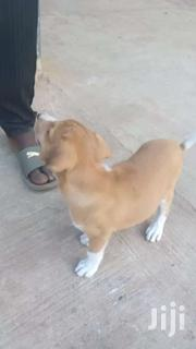 Poppy For Sale | Dogs & Puppies for sale in Greater Accra, Accra Metropolitan
