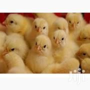 Broiler Day Old Chicks | Livestock & Poultry for sale in Greater Accra, Accra Metropolitan