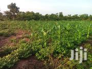 500 Acres Of Farmland For Sale At Kintampo | Land & Plots For Sale for sale in Brong Ahafo, Kintampo South