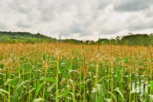 Farmland For Lease