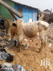 Caw And Goat Cool Price | Other Animals for sale in Northern Region, Gushegu