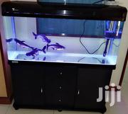 Imported Aquarium | Fish for sale in Ashanti, Kumasi Metropolitan