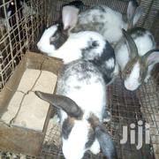 Breeding Stock | Livestock & Poultry for sale in Greater Accra, Ashaiman Municipal