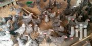 Poultry Fowls | Livestock & Poultry for sale in Ashanti, Kumasi Metropolitan
