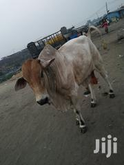 Cow And Goat Cool Price | Other Animals for sale in Northern Region, Gushegu