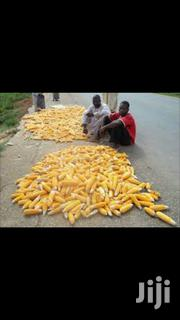 Yellow Maize | Feeds, Supplements & Seeds for sale in Greater Accra, Akweteyman