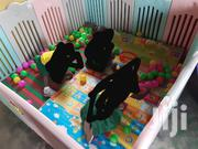 Play Pen N Free Balls | Toys for sale in Greater Accra, Achimota