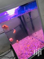 Aquarium With Goldfish | Fish for sale in Greater Accra, North Kaneshie