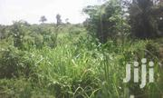 100 Acres Of Land For Urgent Sale At Adeiso  In The Eastern Region | Land & Plots For Sale for sale in Eastern Region, Suhum/Kraboa/Coaltar