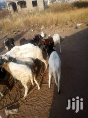 I Am Selling Sheep With Cool Prices   Other Animals for sale in Northern Region, Gushegu