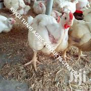 Quality Dayold Chicks On Sale | Livestock & Poultry for sale in Greater Accra, Ashaiman Municipal