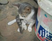 Young Male Mixed Breed Mongrel | Cats & Kittens for sale in Greater Accra, Odorkor