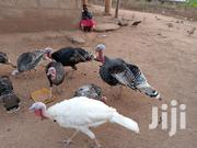 Turkeys For Sale | Livestock & Poultry for sale in Ashanti, Bekwai Municipal