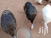 Get Your Turkeys From Ayim's Farm | Livestock & Poultry for sale in Ashanti, Bekwai Municipal