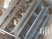 Quail Cage With 85 Female Quails And 15 Male Quails | Livestock & Poultry for sale in Eastern Region, Lower Manya Krobo