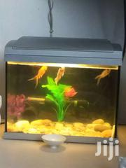 Aquarium | Fish for sale in Greater Accra, Tema Metropolitan