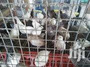 Point Of Lay Quails | Livestock & Poultry for sale in Greater Accra, Achimota