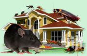 Fumigation And Pest Control   Pet Services for sale in Greater Accra, Accra Metropolitan
