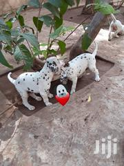 Baby Male Purebred Dalmatian | Dogs & Puppies for sale in Greater Accra, Accra Metropolitan