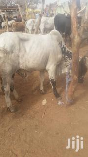 Cow For Seller | Livestock & Poultry for sale in Northern Region, Tamale Municipal