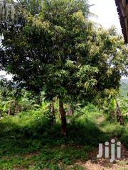 Land For Sale | Land & Plots For Sale for sale in Central Region, Abura/Asebu/Kwamankese