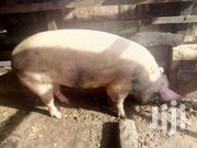 Cool Animal | Livestock & Poultry for sale in Greater Accra, Chorkor