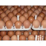 Brahma Eggs | Other Animals for sale in Eastern Region, Akuapim North