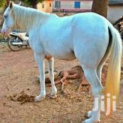 A Horse | Livestock & Poultry for sale in Northern Region, Zabzugu/Tatale