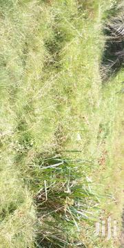 PLOT FOR SALE | Land & Plots For Sale for sale in Ashanti, Atwima Nwabiagya