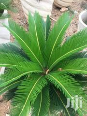 Plants, Shrubs And Flowers | Garden for sale in Greater Accra, East Legon