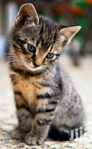 Kittens For Sale | Cats & Kittens for sale in Greater Accra, Ga East Municipal