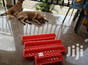 Long Line Feeder | Pet's Accessories for sale in Central Region, Awutu-Senya