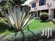Furnished 2 Bed Apt Lapaz   Houses & Apartments For Rent for sale in Greater Accra, Darkuman