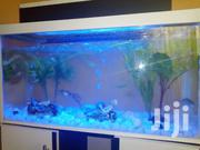 New Aquarium For Sale | Fish for sale in Greater Accra, Ashaiman Municipal