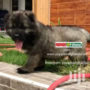 Pedigree Caucasian Shepherd Puppies For Sale   Dogs & Puppies for sale in Greater Accra, Adenta Municipal