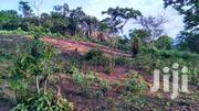 FOR SALE  161+ Acres Fertile Farmland NKWANTA DISTRICT, VOLTA REGION | Land & Plots For Sale for sale in Eastern Region, Asuogyaman